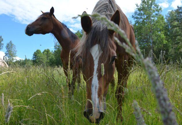 I utredningen förslås reglering av hur många hästar som får gå på en yta och hur länge den får användas till häst. Det har bland annat skapat oro hos hästhållare med begränsad tillgång till hag- och betesmark, till exempel ridskolor eller små hästgårdar.