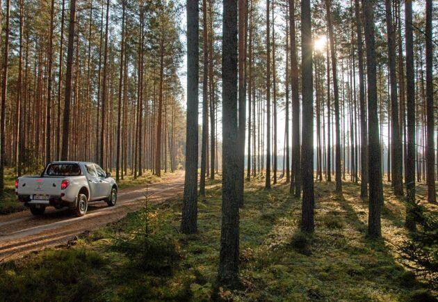 Lettlands skogar lockar svenska investerare. Ikea har gått från 0 till 93 000 hektar på bara fyra år och är nu Lettlands näst största privata markägare.