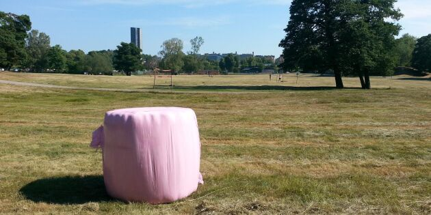 Klent intresse för Stockholms gräs