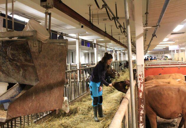 Öknaskolan har både mjölkdjur och kalvar på själva skolan och köttdjur lite längre bort på gården Nynäs.