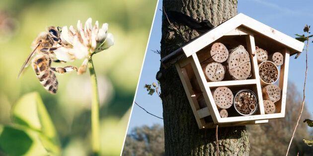 Så lockar du insekter till din trädgård – och räddar världen!