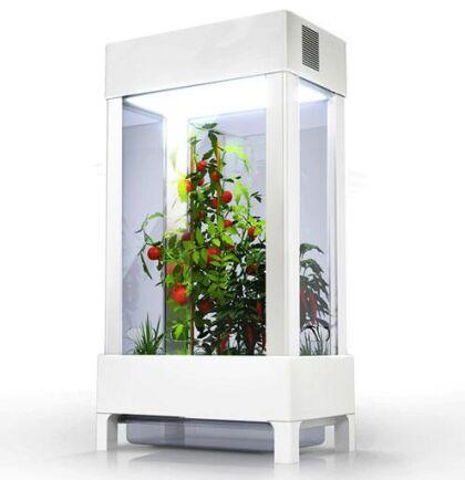 En lite större modell presenteras av Niwa där du kan odla tomater eller varför inte chili?