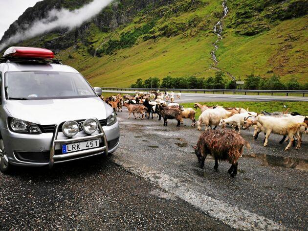 Semestern med minihusbilen i Norge blev både minnesvärd och bra för plånboken