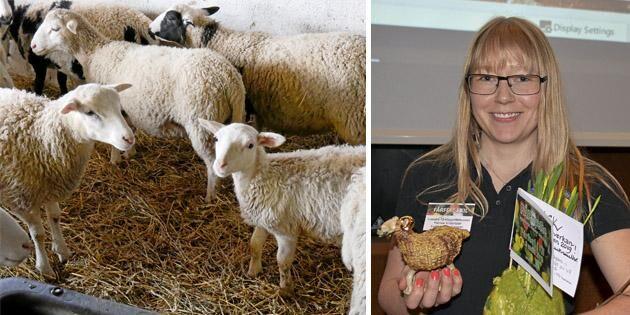Råd från experten: Hantera ullen rätt och höj värdet