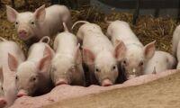 Jordbruksverkets förslag sågas av SLU:s experter