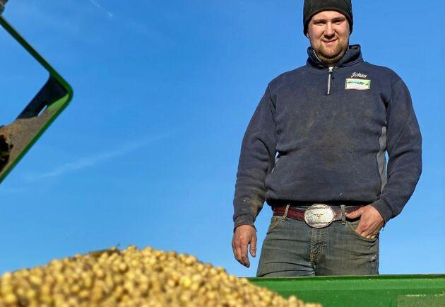 Sojabönor. Årets skörd kommer att pressas. Av oljan blir det sannolikt hemmagjord SME, alltså motsvarande RME som gårdens lastbil ska köras på. Presskakan säljs som foder.