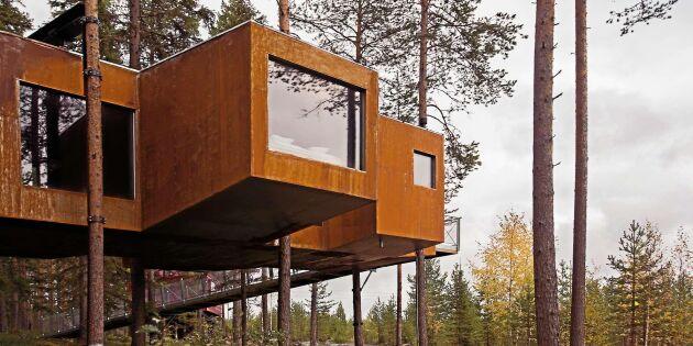 Treehotel-ägaren: Vi har Sveriges mest produktiva skogshektar