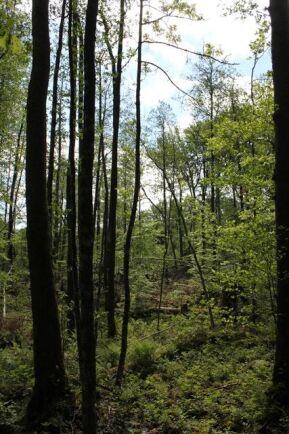 Skogsstyrelsen vill att alla ska tycka likadant om nyckelbiotoper och bjuder in skogsnäringen och miljörörelsen till en samverkansprocess.