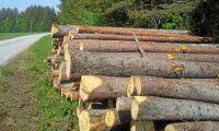 Skogsutredningen får fem månader till