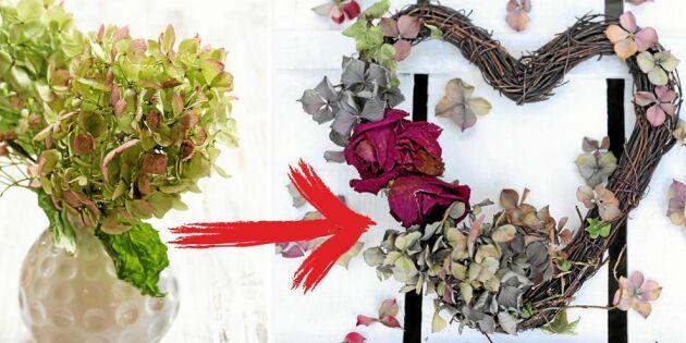 Torka hortensia! 5 smarta steg som bevarar färgen