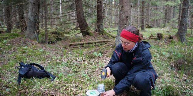Skogens föränderliga mikroklimat gynnar biologisk mångfald