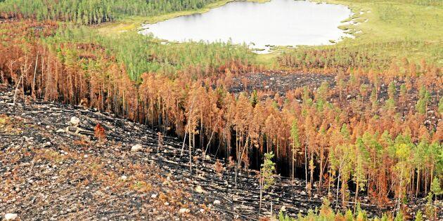 Bolagen höjer premier på skogsförsäkringar