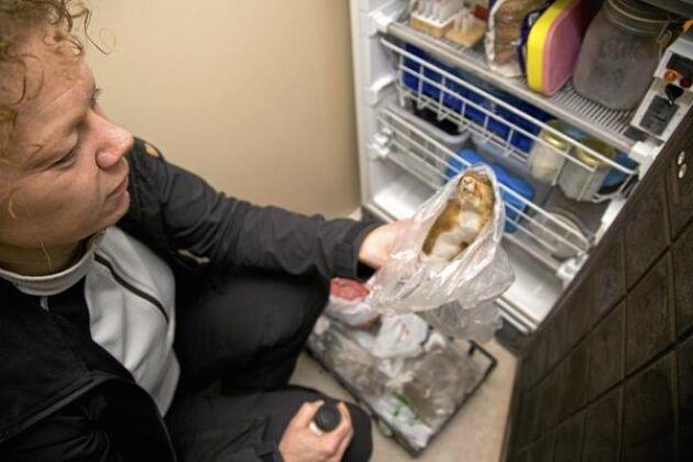 Annette Johansson har olika doftprover i frysen. Bland annat från ekorre.