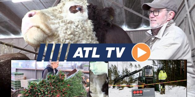 ATL TV: Stölder stoppar skogsmaskiner