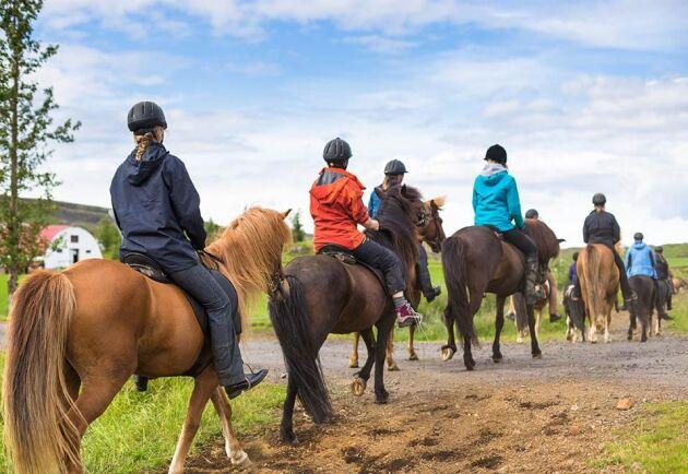 Flera ridklubbar och hästorganisationer tror att lagförslaget, om det klubbas, kommer att stoppa ridning och körning i många områden. Arkivbild.