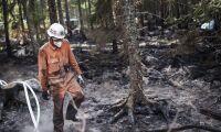 Kvinna misstänkt för skogsbrand släpps
