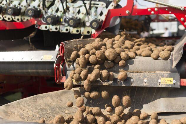Lyckeby höjer ersättningarna för stärkelsepotatisen och hoppas på nya odlare.