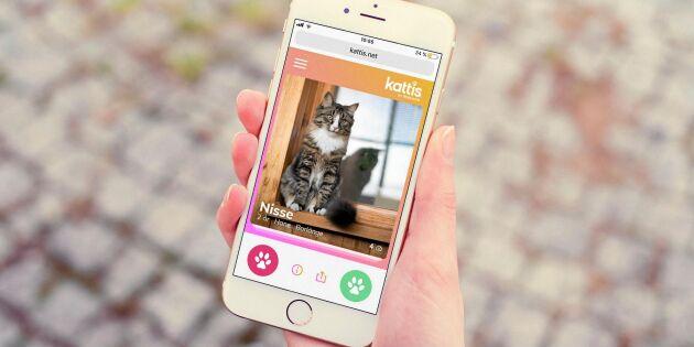 Nu finns det ett Tinder för katter