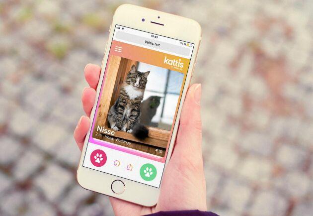 Tusentals katter behöver hitta nya hem –nu finns Kattis som ska para ihop katter med nya ägare.