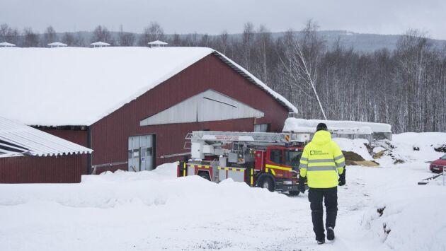Den drabbade mjölkgården är en av Norrbottens största. Ett 90-tal kor antas finnas under det nedrasade taket.