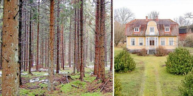 Skogsgård med välskött skog till salu