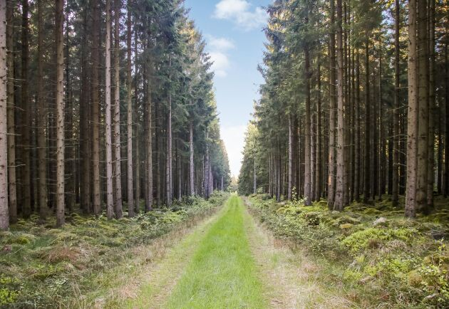 Sedan 2018 har skogspriserna i Halland stigit med 10 procent, och under fjolåret köpte Silvestica 5000 ha från Stora Enso för cirka 1200 kr/m3 (bilden).
