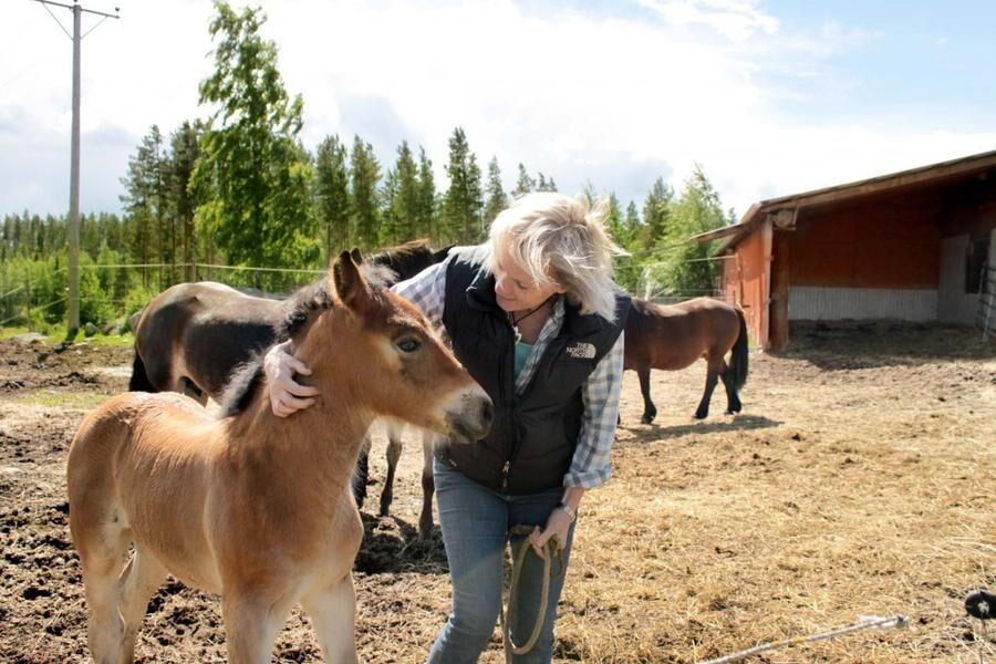 Land.se skriver om Diana Sandell och Lars danhard som satsar på hästturism i Hälsingland.