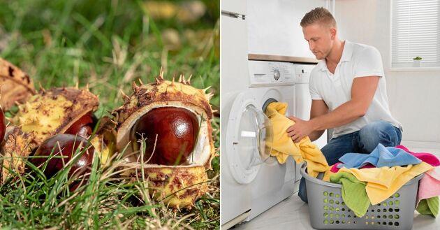 Byt ut de importerade tvättnötterna mot kastanjer! Det är både billigare och bättre för miljön.