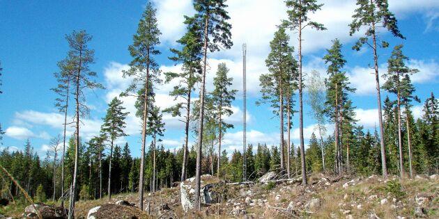 Frihuggning garanterar evighetsträdens funktion