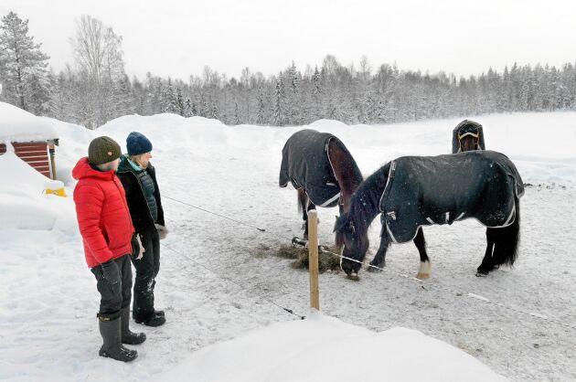 Snön, de stora ytorna och möjligheten av ha både hundar och hästar gör att Andreas och Emelie gillar livet i norrbottniska Töre.