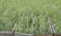 Nytt världsrekord i skogsplantering