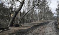Grekiska skogsbränder har tagit 74 liv