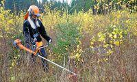 Jobbsatsning på Skogsstyrelsen