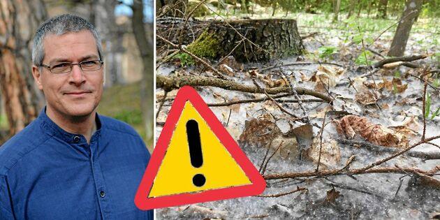 Expertens varning om det vita luddet – lite glöd kan orsaka en eldsvåda