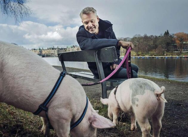 """I en debattartikel bemöter tre lantbrukare påståenden om svensk djurhållning och påverkan på miljön som förs fram i Henrik Schyfferts program """"Köttets lustar""""."""