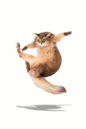 Tro inte att katter alltid landar med fötterna ner.