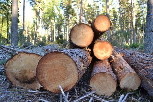 På den elektroniska virkeshandelsplatsen Kuutio kan finska skogsägare enkelt ta in anbud från alla aktörer i branschen.