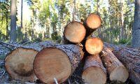 Nytt index visar negativ trend i skogen