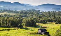 Norge slår rekord i skyddad skog
