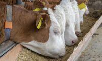 Köttproducent krävs på mångmiljonbelopp