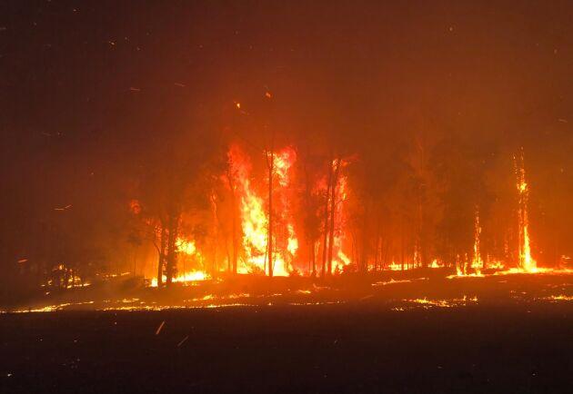 Delstaten New South Wales i Australien har drabbats mycket hårt av bränderna. Bilden kommer från Green Wattle Creek nära Oakdale.
