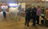 Sju nya hästar positiva för EHV-1