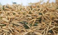 Ny lag ska bli tydligare om insekter som mat