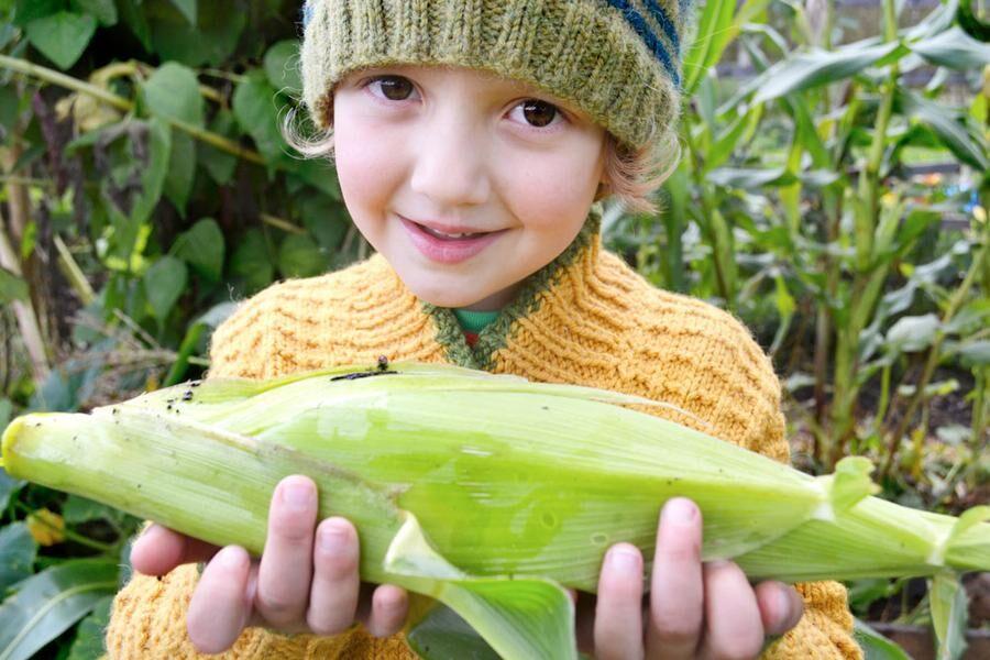 I ett trädgårdsskafferi finns plats för allas favoriter. Otto, 5 år, älskar majs.