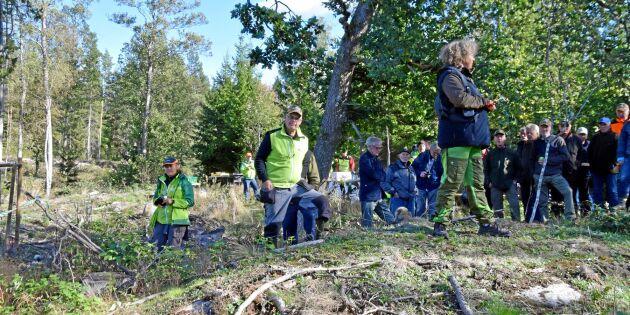 Södra storsatsar på viltdemohägn