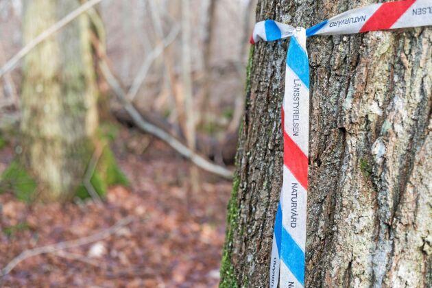 Sveaskog når 98 procent av alla miljövärden vid sina avverkningar.