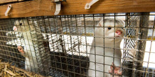Djurskyddsfrågorna utredningen väjde för