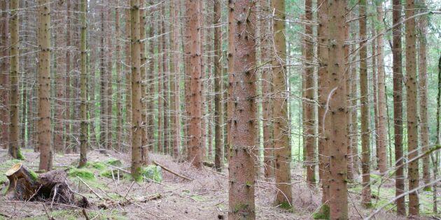 Fortsatt stort sug efter att köpa skogsmark