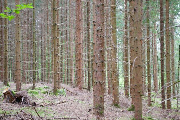 86e17da9 I södra Sverige har priserna på skogsmark stigit mest.