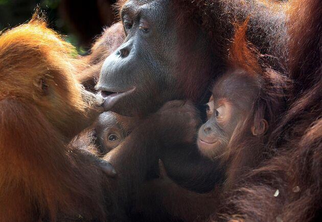 Den höga takten av utrotning är enligt FN-rapporten redan tio till hundra gånger högre än den i genomsnitt varit under de senaste tio miljoner åren. Arkivbild.